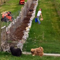 Dan prepares the vineyard, vegetable bed for 2016