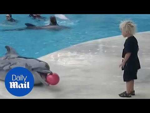 A toddler plays fetch with a dolphin in Crimea - Daily Mail