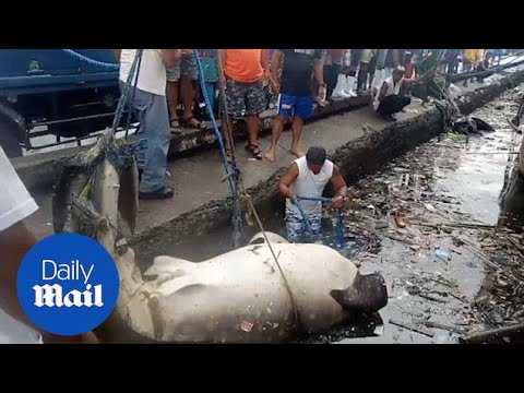 Endangered whale shark found dead covered in plastic pollution