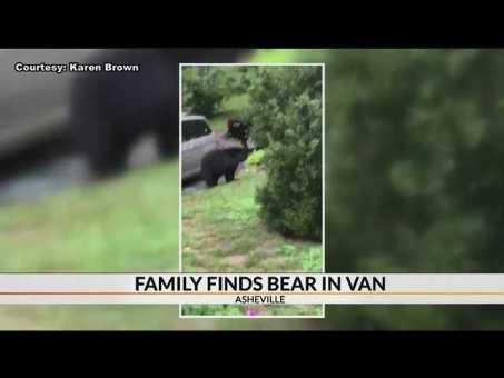 Bear hops into Asheville family's van, visits neighbor's kitchen
