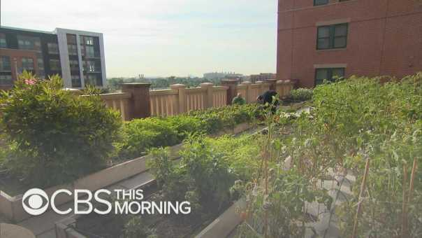 Rooftop Roots installs vegetable gardens throughout D.C.