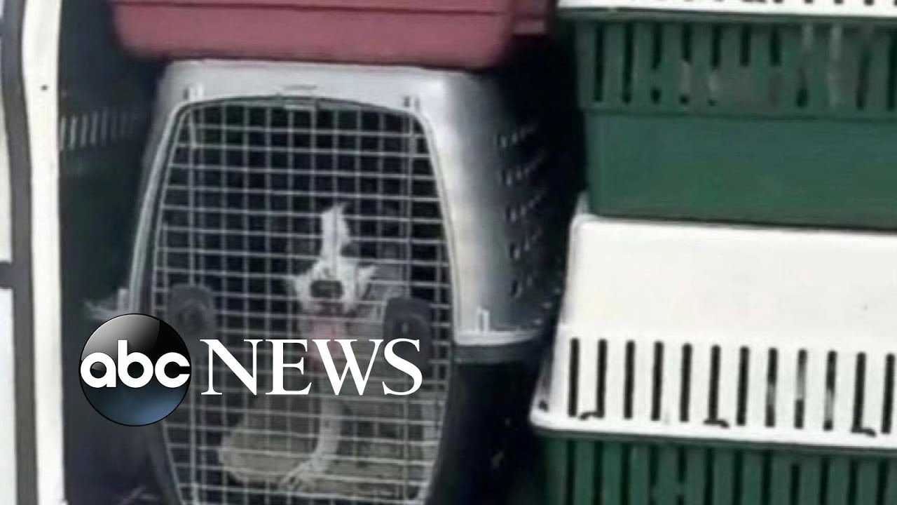 Vulnerable pets rescued from the floods