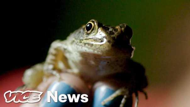 This Rare Frog's Fate Depends On A Supreme Court Case