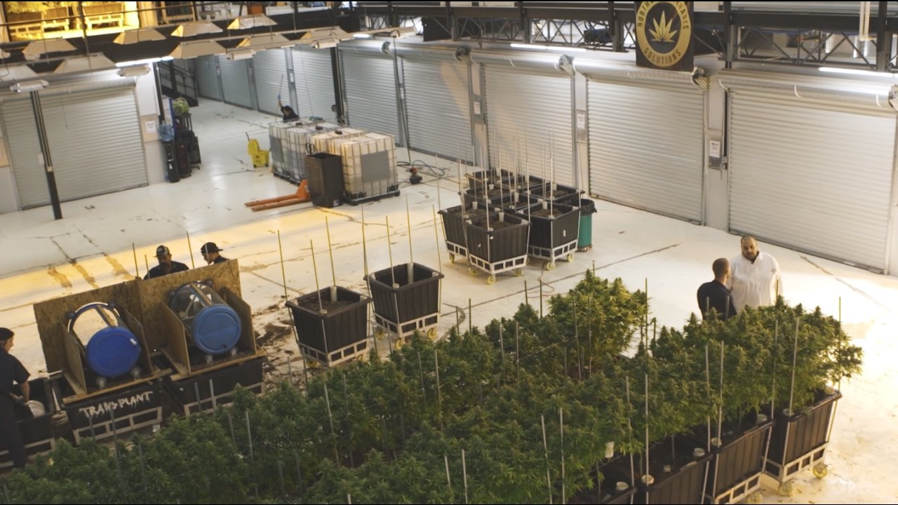 "Berner - ""Marijuana Mania"" Episode 3: Seattle [Video]"