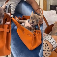 Reality Star Masika Kalysha Uses Her Birkin Bag as a Dog Carrier