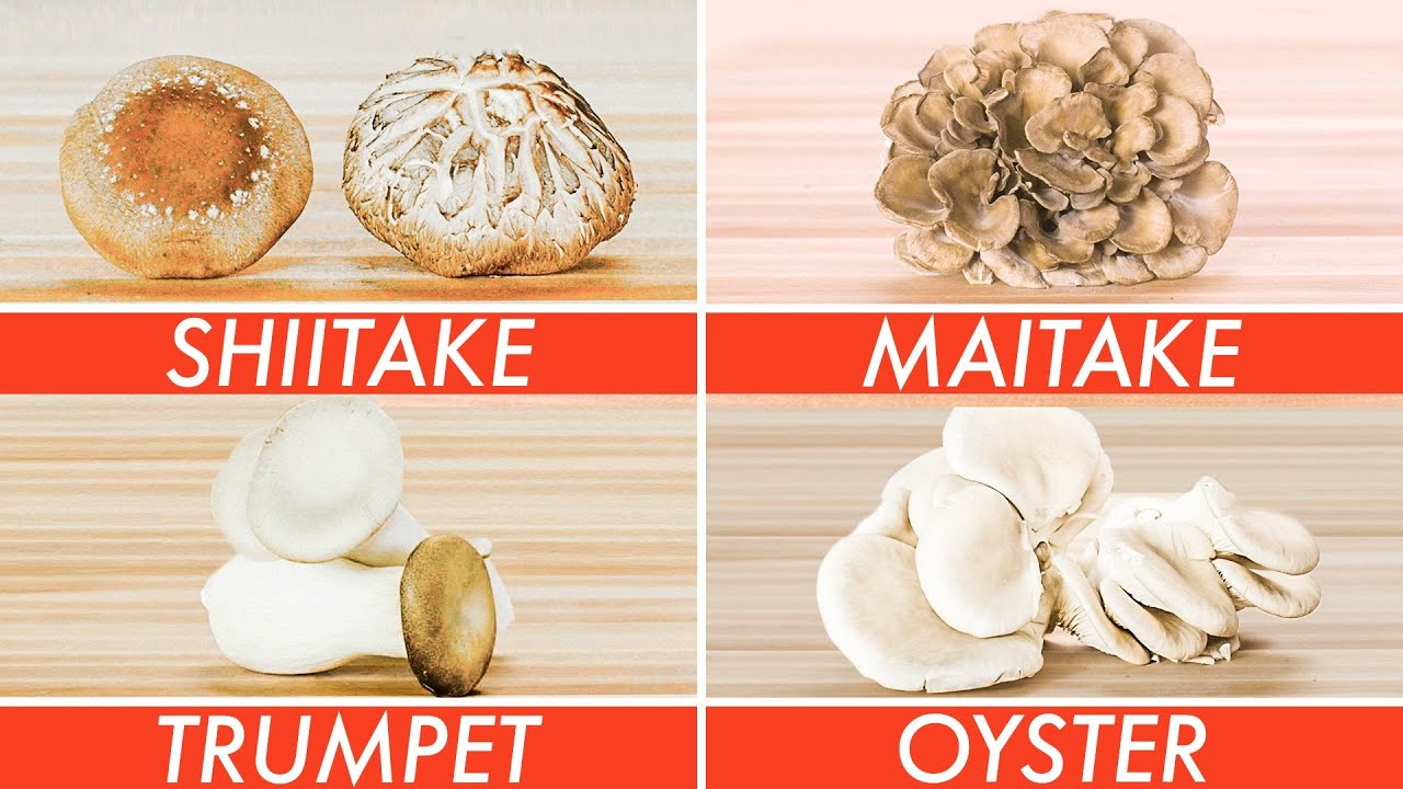 Picking The Right Mushroom For Every Recipe - The Big Guide | Epicurious