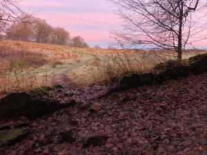 Trail leading into a field through a broken stone wall with a pink sky in the background.