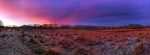 Frosty field landscape with a deep purple and pink sky at sunset.