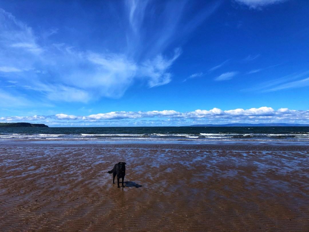 The beach in Ayr, Scotland, on a sunny day.
