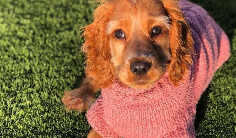 Fashion Trends For Your Furry Friend