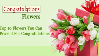 congratulations flowers- Top 10 Flowers You Can Present For Congratulations