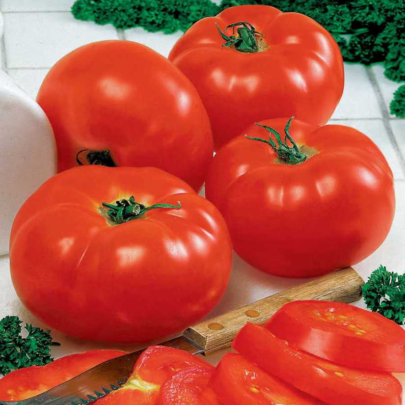 Big beef still unsurpassed as the top choice for fresh market beefsteak tomatoes. The large fruit has old-time tomato flavor and the vines are resistant to many of the problems that can discourage gardeners.