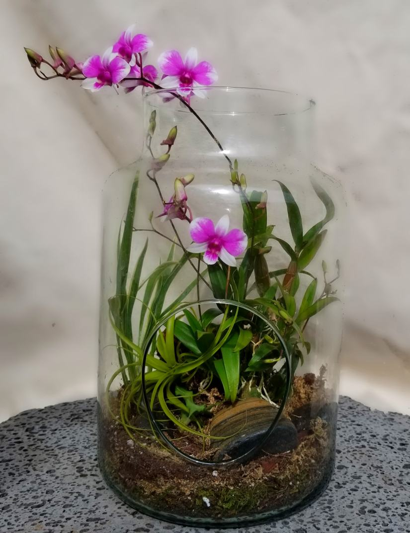 In general, if your orchids tend to dry out too often, use plastic pots rather than clay and use a fine potting mix. If you tend to be a heavy waterer, use clay pots with a coarse mix.