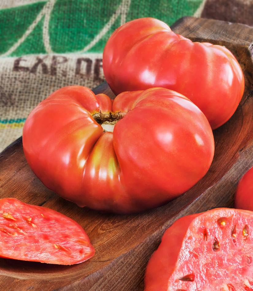 Beefmaster was bred to produce larger and meatier. Beefmaster is hybrid tomato that resistant to verticillium wilt, fusarium wilt, and root knot nematodes.