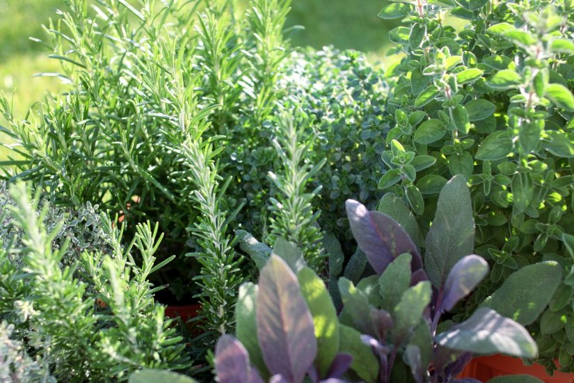 You may also want to put in companion planting, interspersing Chinese parsley, chives, dill, chrysanthemums, garlic, and onion throughout your garden to repel mites.