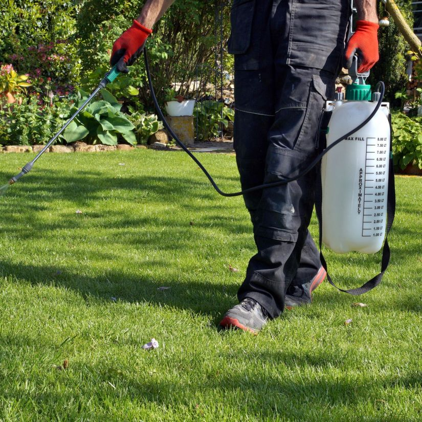 Mole crickets and their nymphs can be flushed out of the soil with soapy water. Mix two tablespoons of liquid dishwashing detergent, like Dawn, with two gallons of water. Pour it over a 2-square-foot area of your lawn.