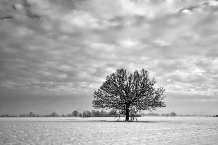 grayscale photography of tree under cloudy sky