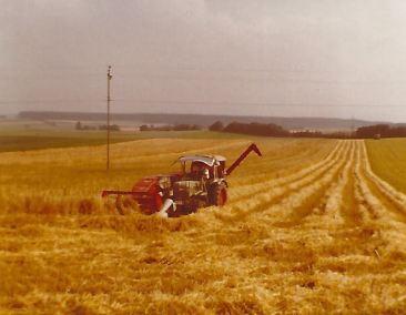 Ernte Getreidefeld (historisch)
