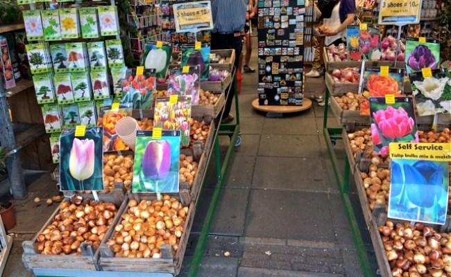 A Unique Souvenir From Amsterdam Tulip Bulbs Getsetandgo