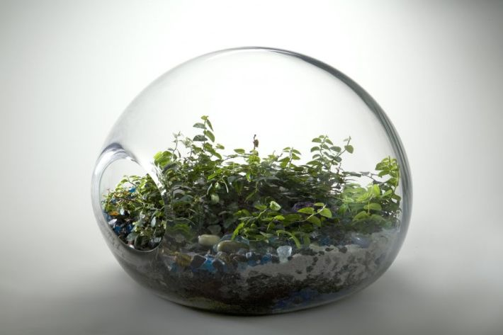 Plants terrarium pot