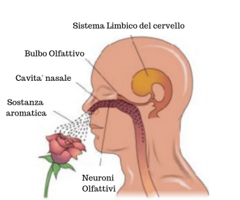 lymbic-system1.png