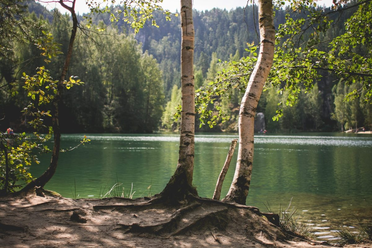 lakeside-nature-in-czech-republic-picjumbo-com