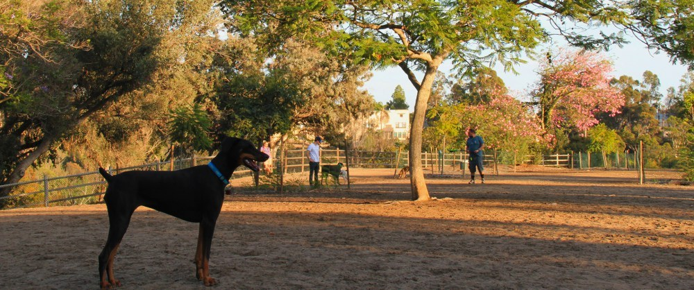 Spend some time with your pooch at a dog park and meet other pet owners