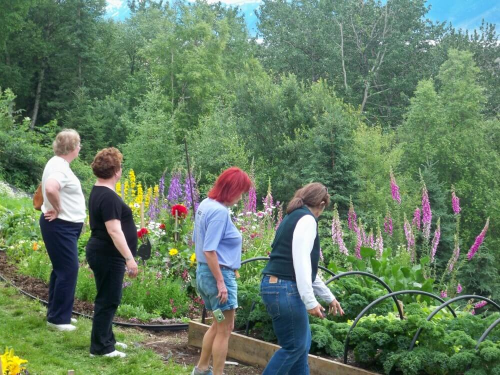 Enjoy The Activities Of Gardening Groups In Anchorage And Make New Friends