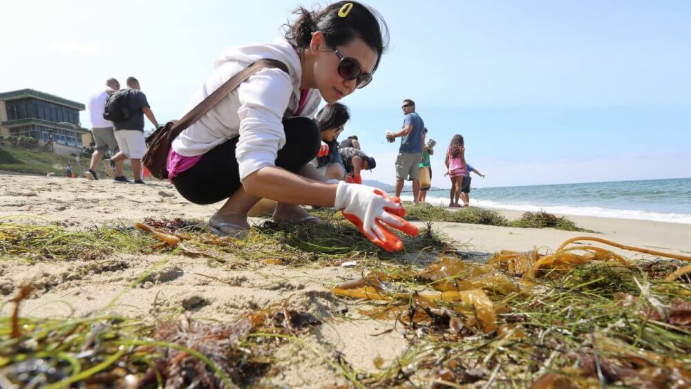 Take Part In Cleaning Ocean Bay Activities In Los Angeles And Make New Friends