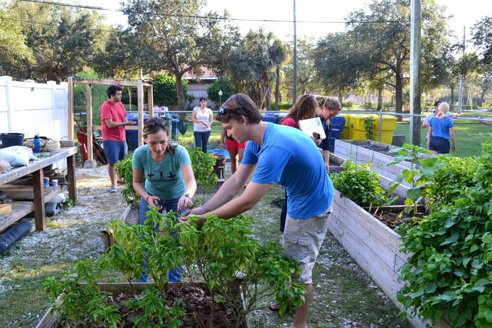 Improve Your Gardening Skill And Make New Friends In St Petersburg By Joining Gardening Clubs