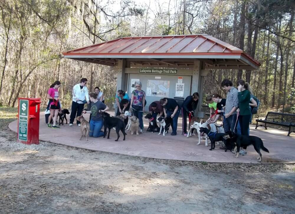 Meet With Other Dog Owners And Make New Friends