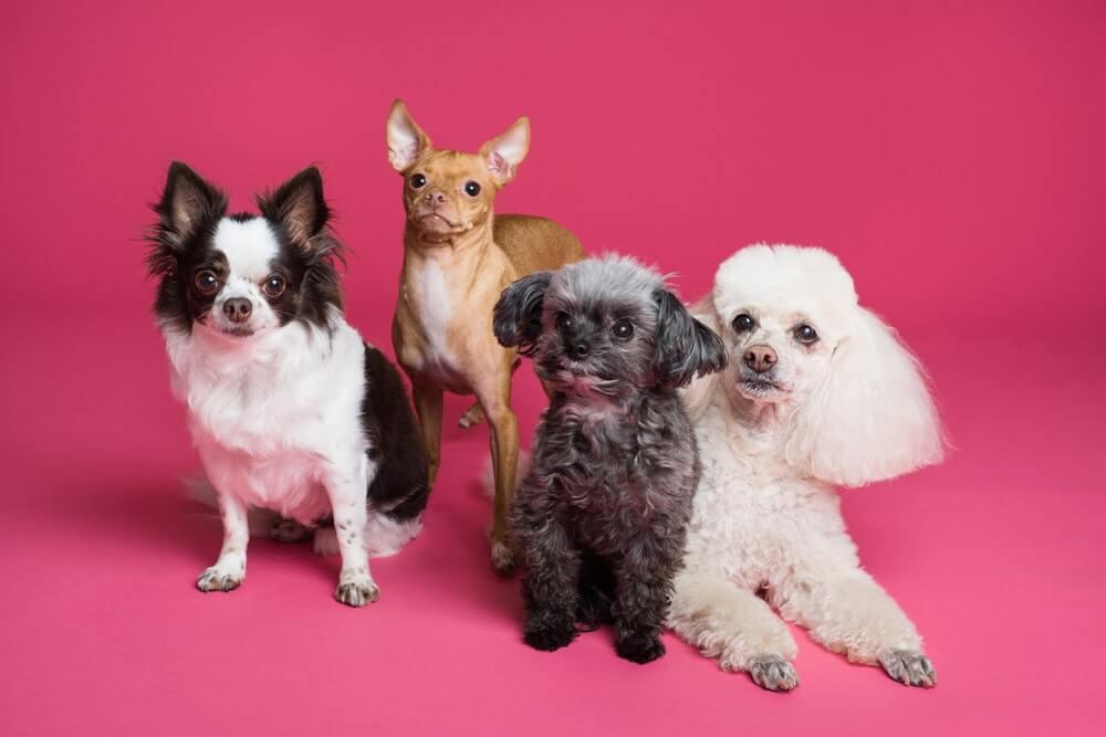 Make friends at a pet school