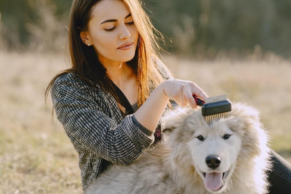Volunteer at a pet shelter