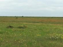 Fields of wildflowers