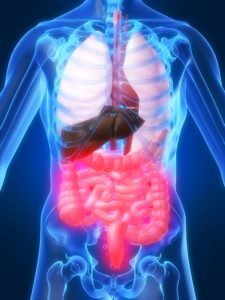 The Importance of a Healthy Microbiome