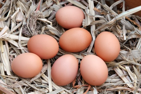 Vitamin B foods - eggs