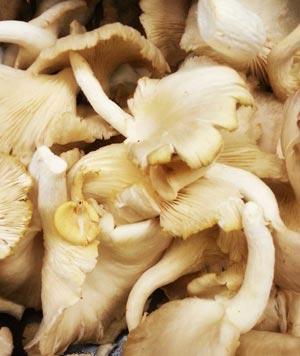 mushroom-5-300