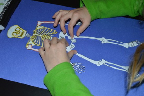 assembling a skeletal system project