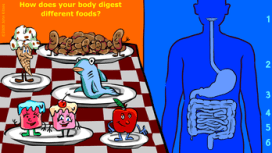 Digestion Story