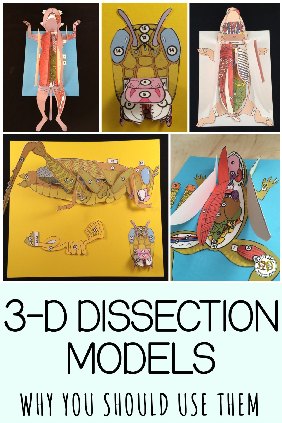 Read why 3-D dissection paper models can provide an authentic alternative and realistic preparation to the real thing. #gettingnerdyscience #papermodels #dissection #dissectionmodels