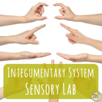 Lesson Plan: Integumentary System Sensory Lab