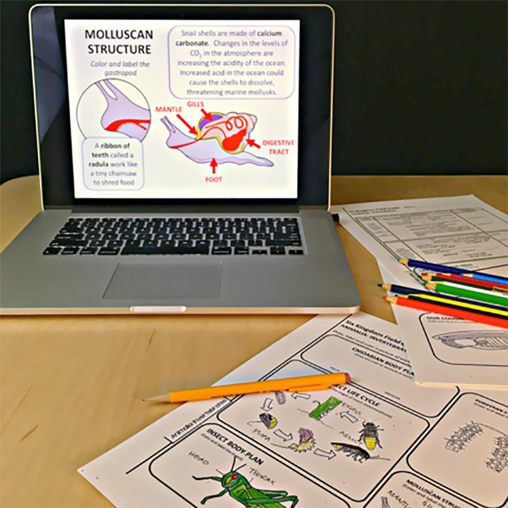 TIME SAVING & EASY TO IMPLEMENT - Our Low-Prep PowerPoint Bundles include self-guided daily lesson notes and activities that are easy to adapt and use in your middle or high school classroom.