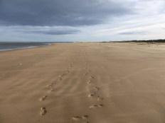 On the Fife Coastal Trail