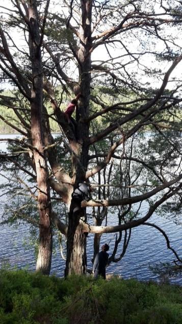 Boys up a tree