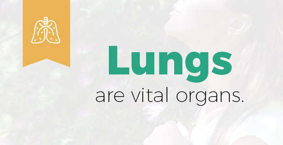 Lung Cancer Fact Sheet