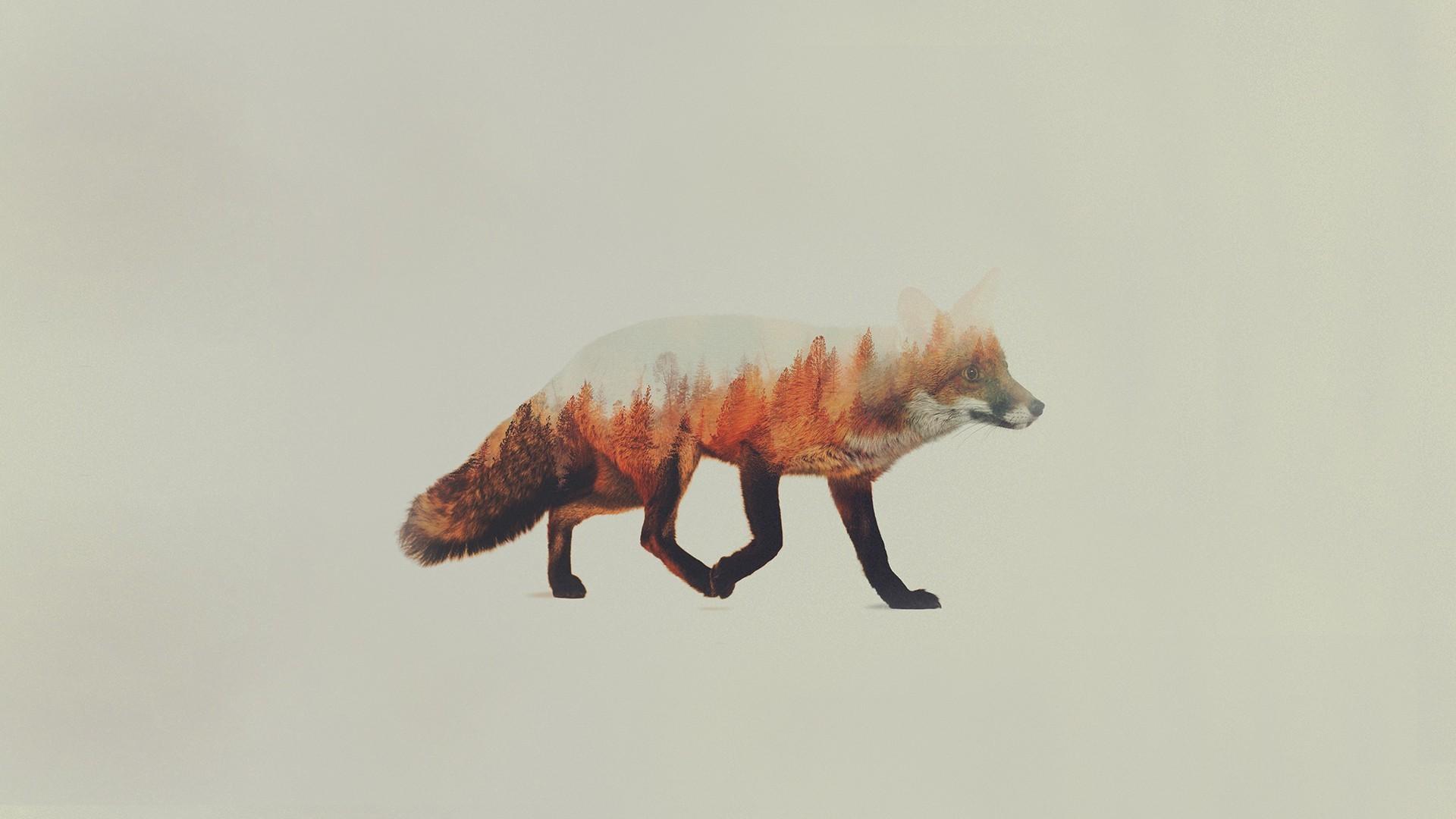 Arctic Fox Wallpaper Cute Aesthetic Fox Wallpaper 77 Images