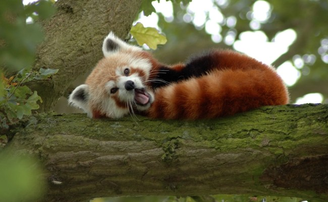Cute Animal Wallpapers For Desktop 54 Images