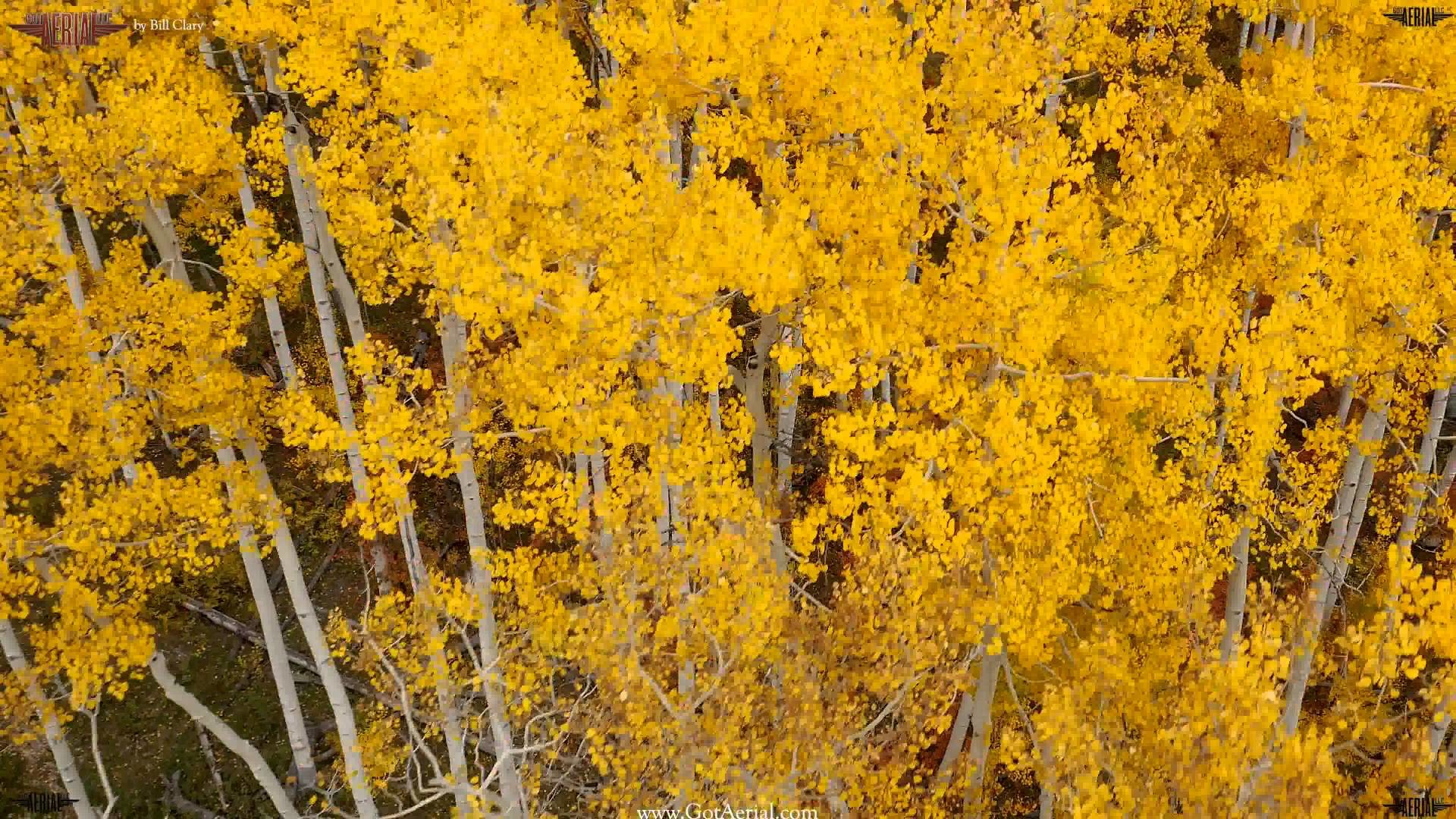 Free Fall Wallpaper For Iphone 6 Aspen Tree Wallpaper 54 Images