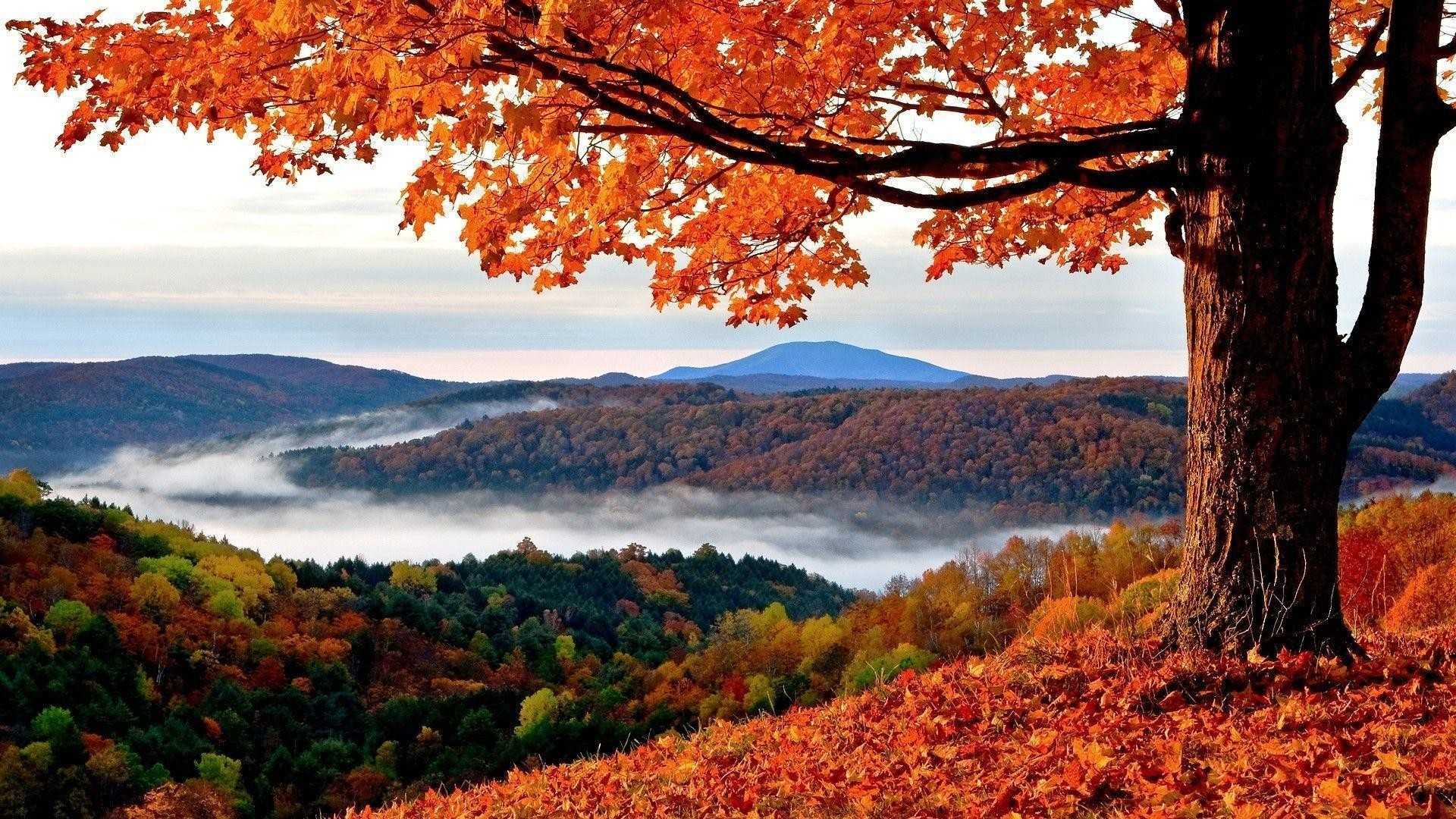 Fall Autumn Hd Wallpaper 1920x1080 Free 1920x1080 Hd Autumn Wallpapers 61 Images