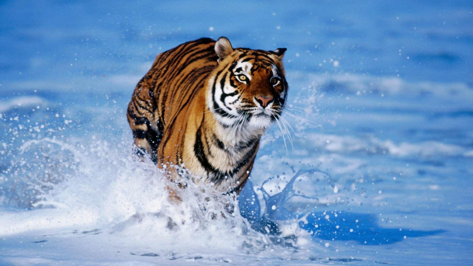 Free Fall Color Wallpaper Wildlife Wallpapers And Screensavers 69 Images